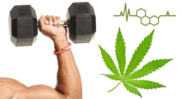 Fitness And Cbd Oil 640x350
